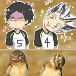 bokuto_akaashi_and_the_owls