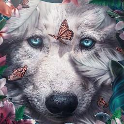 lobo wolf lobos caradelobo animal artdigital freetoedit