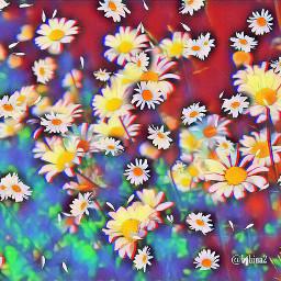 remix fieldsofdaisies daisies freetoedit