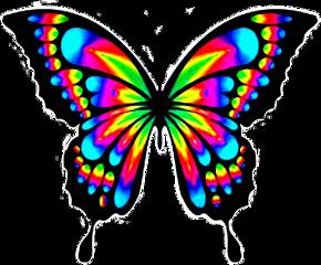 mariposa mariposadecolores neon freetoedit