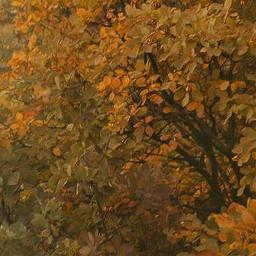background clt freetoedit fall autumn autumnleaves folliage leaves