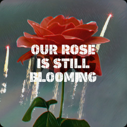 freetoedit our_rose_is_still_blooming invisible_diary