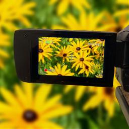 freetoedit camera