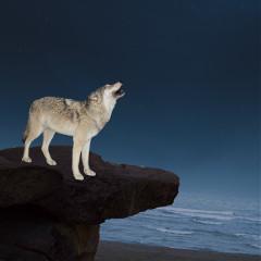 midnightmoonwolfly