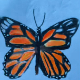 art butterflydrawing