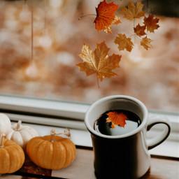coffee coffeeedit fall fallcoffee freetoedit