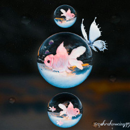 water drops waterdrops butterfly fishes pink blue circle beautiful freetoedit local srcpinkfishies pinkfishies