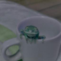 frogs frog froggies frogsarecool smolfrog froggy smol