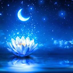 wallpaper flor estrelas agua lua meialua moon brilhos papeldeparede freetoedit local