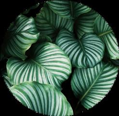 #catcuratedplants,#catcuratednature